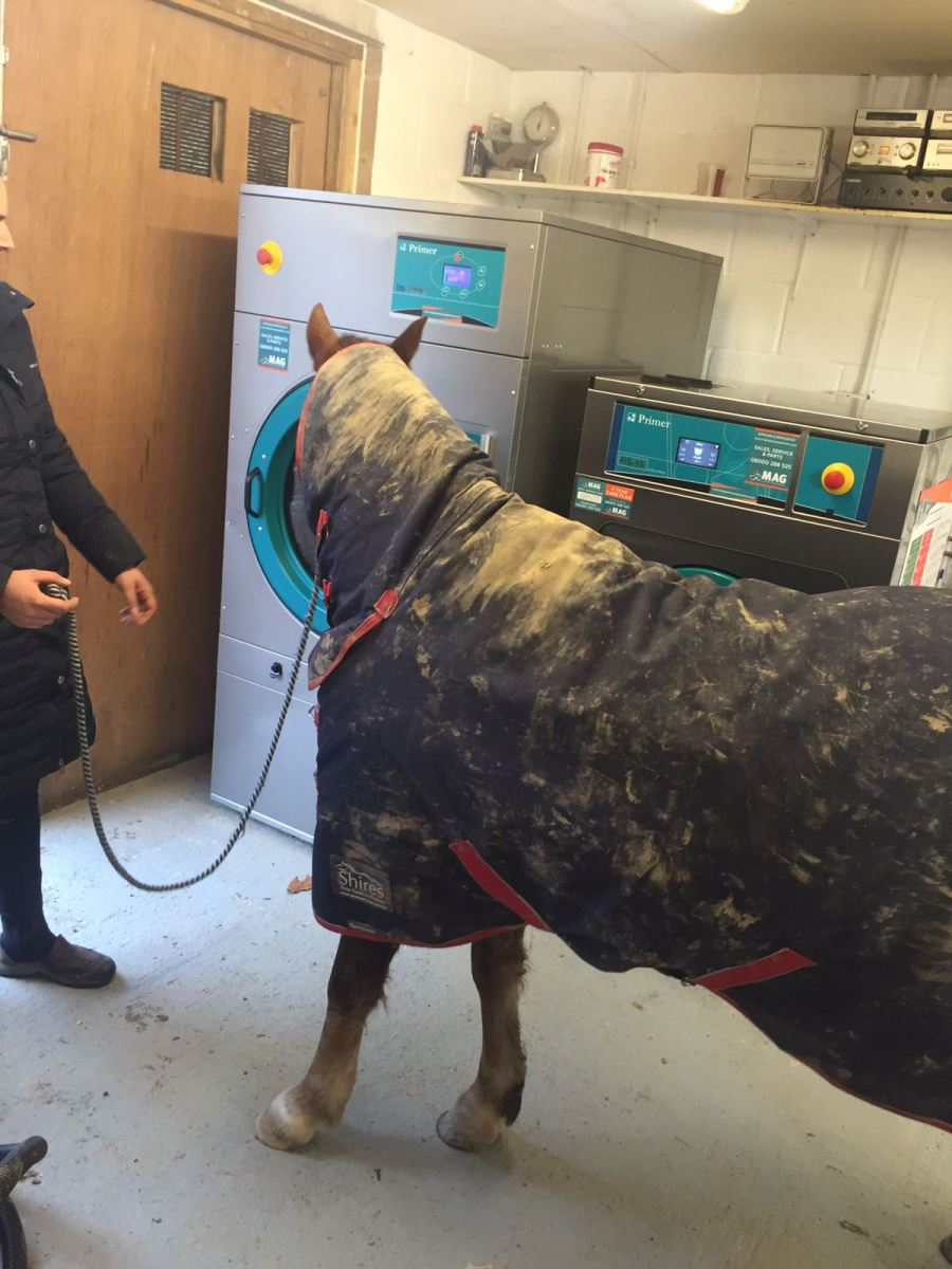can-a-horse-wash-its-own-clothes-take-a-look